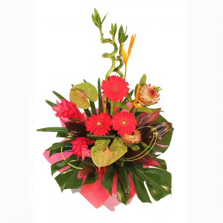 Be Bold! A touch of the tropics